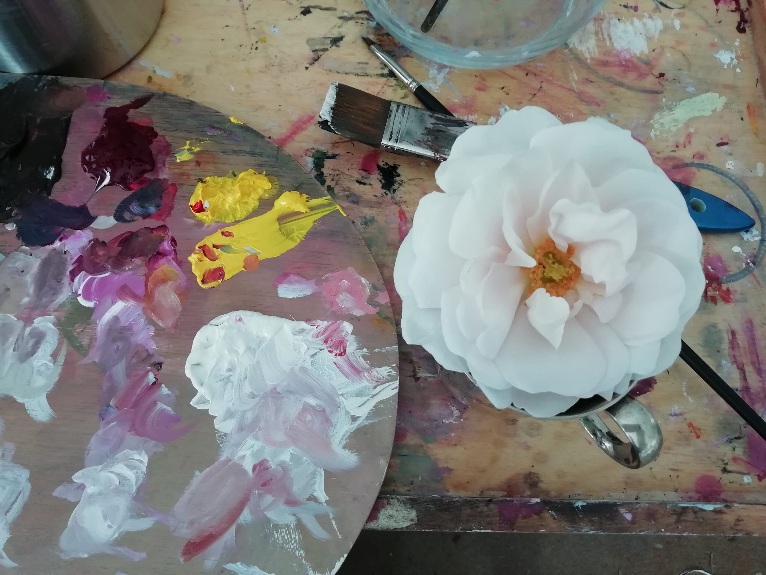 Atelierfenster prunkblume